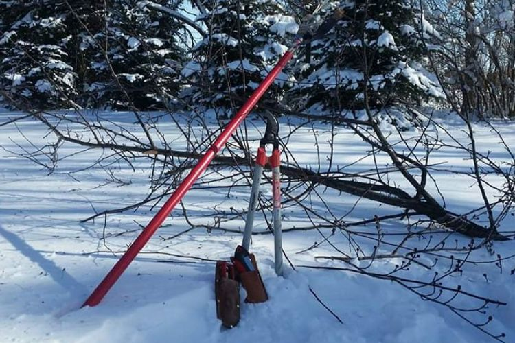 Pruning In The Snow, No Joke
